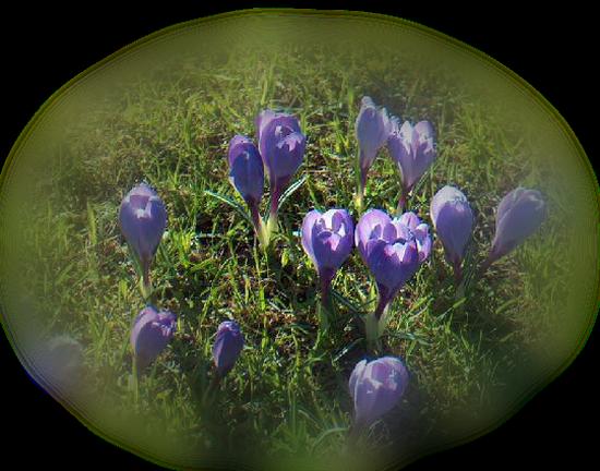 tubes_fleurs_tiram_300