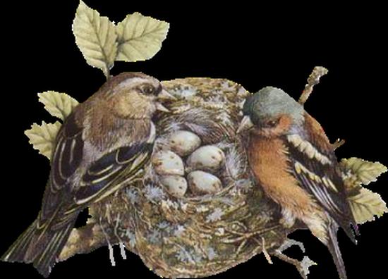 tubes_oiseaux_tiram_243