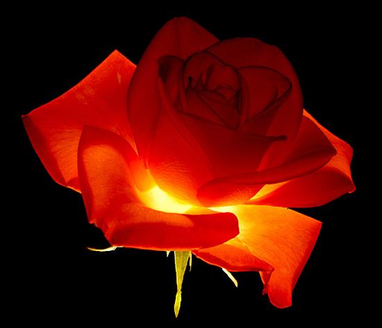 tubes_fleurs_tiram_367