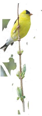 tubes_oiseaux_tiram_22