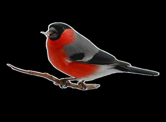 tubes_oiseaux_tiram_147