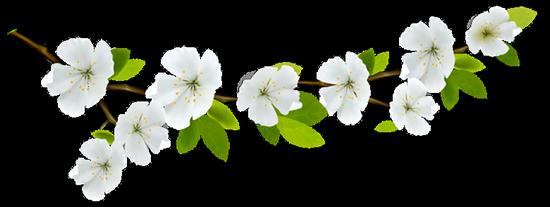 tubes_fleurs_tiram_380