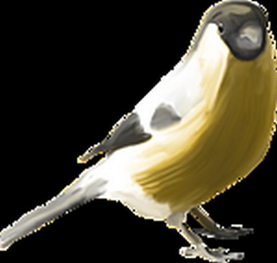 tubes_oiseaux_tiram_69
