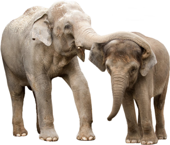 tubes_elephants_tiram_109
