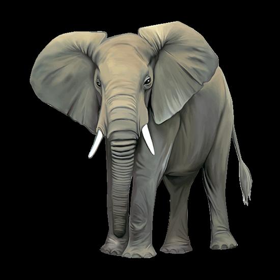 tubes_elephants_tiram_519