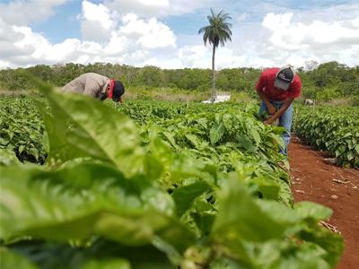 Universidad-Agricultura Sustentable y Protegida