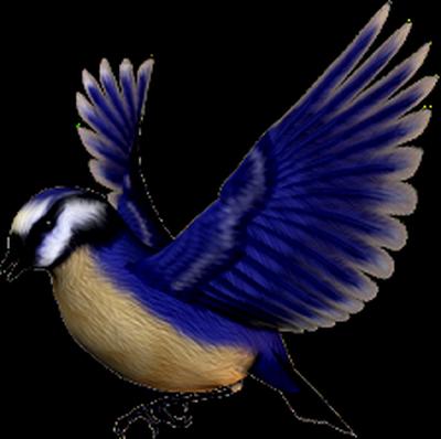 tubes_oiseaux_tiram_242