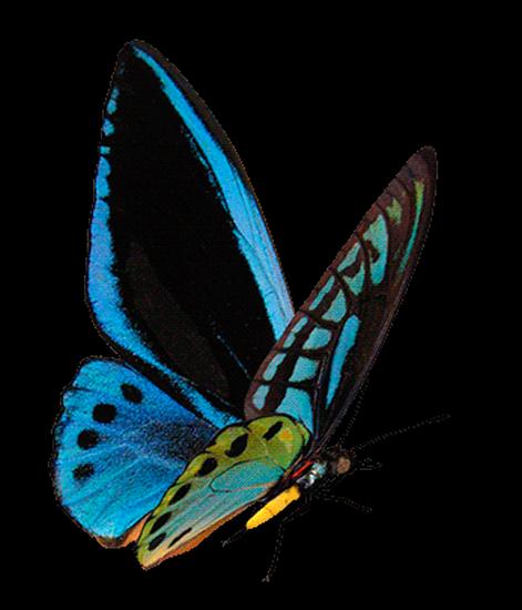 tubes_papillon_tiram_792