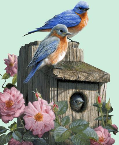 tubes_oiseaux_tiram_190