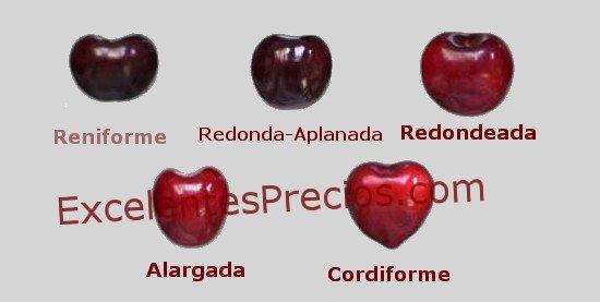 diferentes formas de cereza