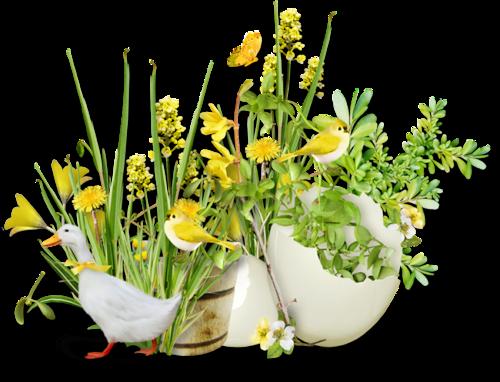 fleurs_paques_tiram_53