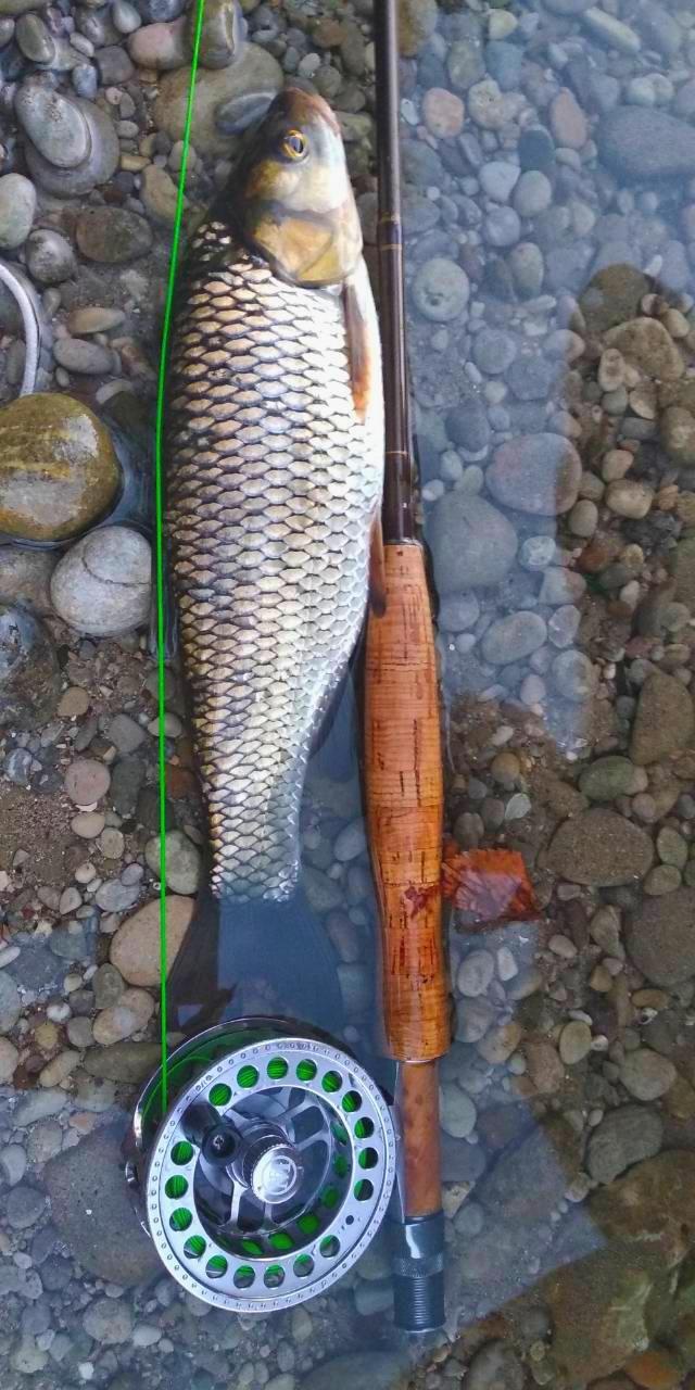 Mušičarenje klena na Skadarskom jezeru IMG_20180720_213809