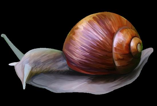 tubes_escargots_tiram_179