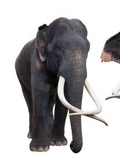 tubes_elephants_tiram_270
