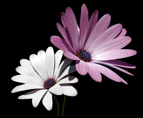 tubes_fleurs_tiram_462