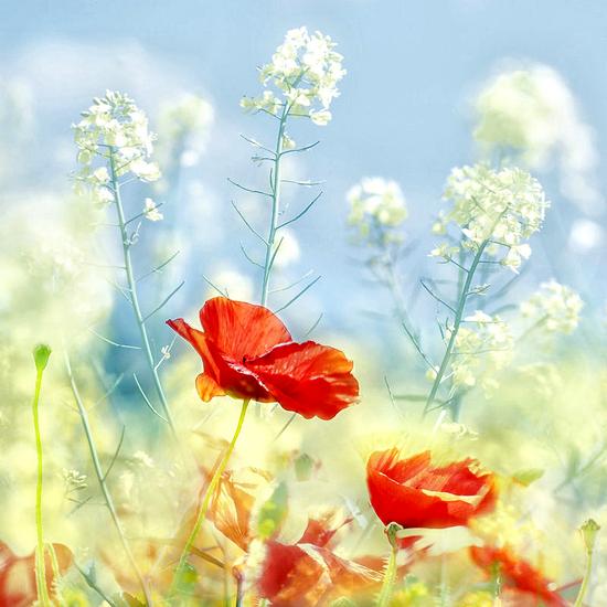 tubes_fleurs_tiram_280