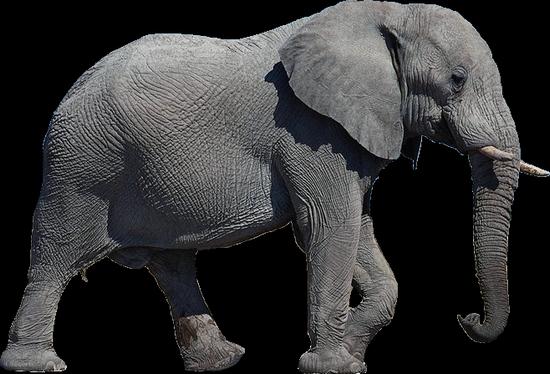 tubes_elephants_tiram_4