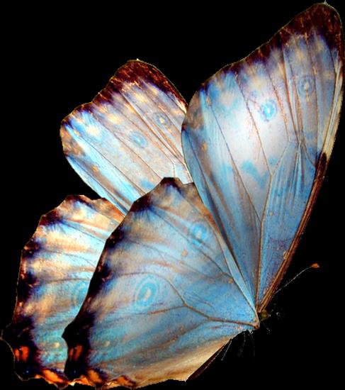tubes_papillon_tiram_687