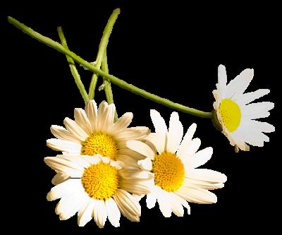 tubes_fleurs_tiram_657