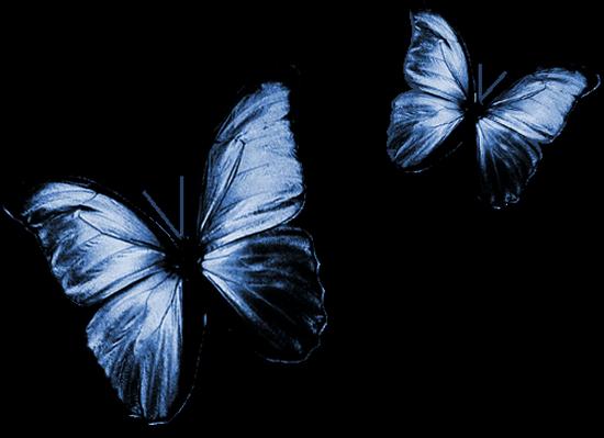 tubes_papillon_tiram_742
