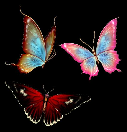 tubes_papillon_tiram_824