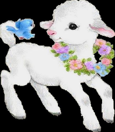 mouton_tiram_64