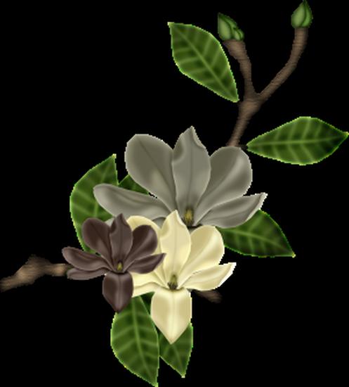 tubes_fleurs_tiram_540