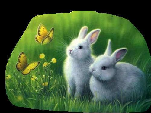 lapins_paques_tiram_1088