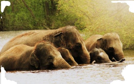 tubes_elephants_tiram_81