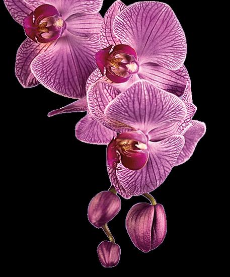 tubes_fleurs_tiram_289