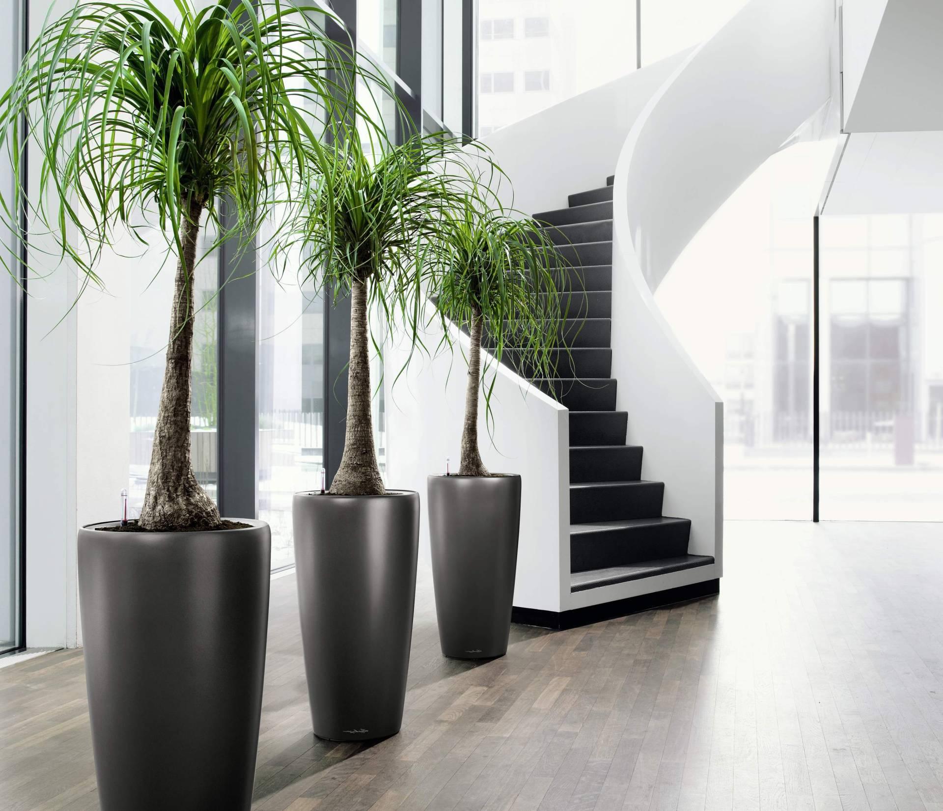 растения в интерьере по фен-шуй