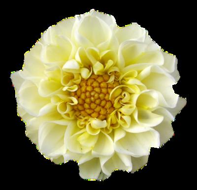 tubes_fleurs_tiram_846