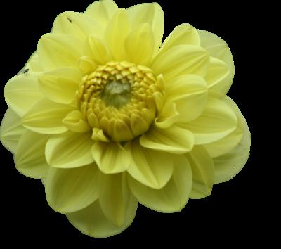 tubes_fleurs_tiram_849