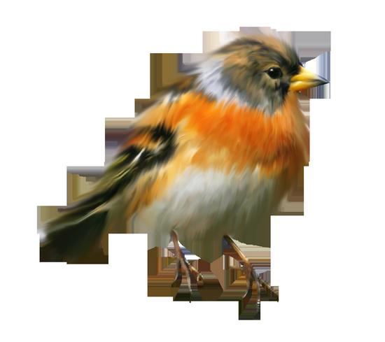 tubes_oiseaux_tiram_31