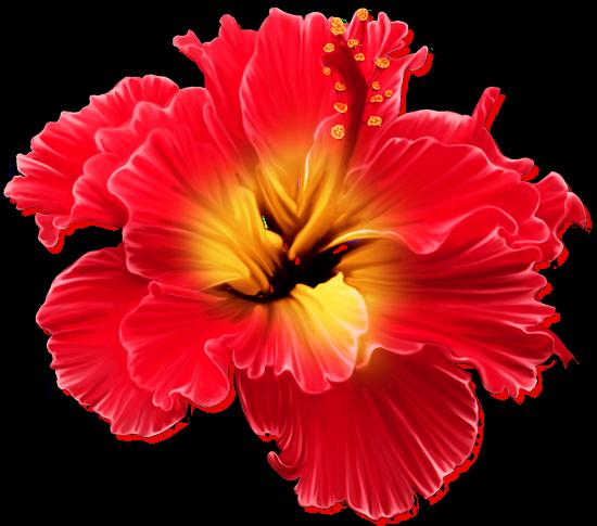 tubes_fleurs_tiram_515