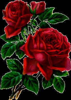 tubes_fleurs_saint_valentin_tiram_280