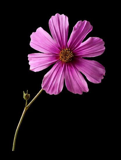 tubes_fleurs_tiram_505