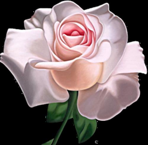 tubes_fleurs_saint_valentin_tiram_16
