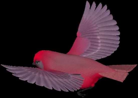 tubes_oiseaux_tiram_215
