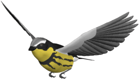 tubes_oiseaux_tiram_216