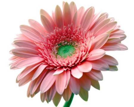 tubes_fleurs_tiram_822