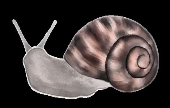 tubes_escargots_tiram_215