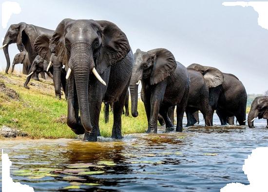 tubes_elephants_tiram_84