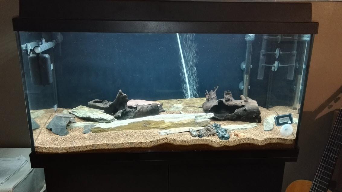 Reprise de l'aquariophilie - bac 110L Juwel IMG_20180616_162644