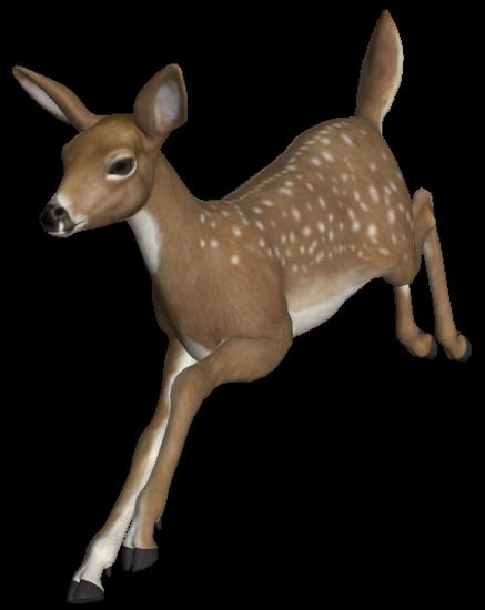 animaux-noel-tiram-63