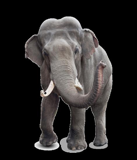 tubes_elephants_tiram_135