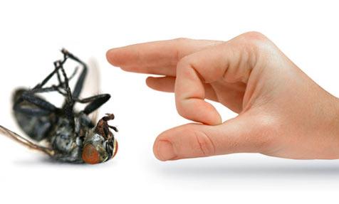Adams Pest Control Melbourne