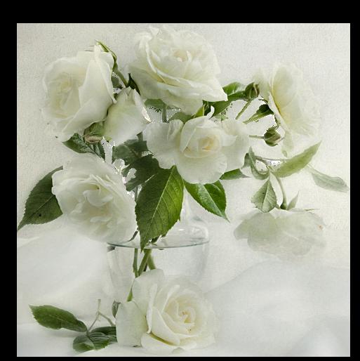 tubes_fleurs_tiram_816