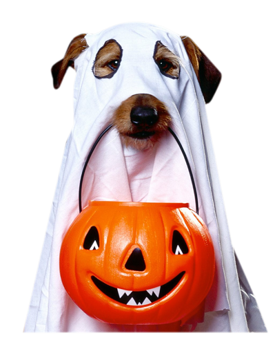 animaux_alloween_tiram_143