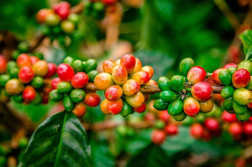 Caf de Colombia